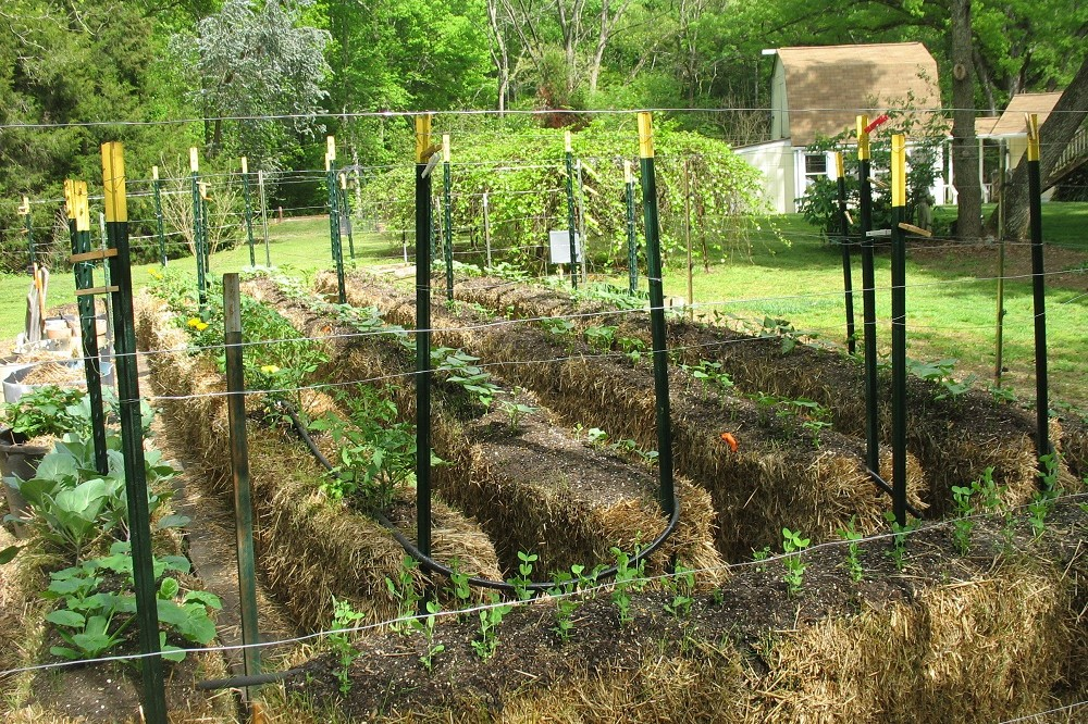 Hay bale gardening the ultimate guide the hay bale garden for Best plants for straw bale gardening